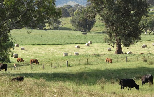 Beechworth Farm Succession Lawyers